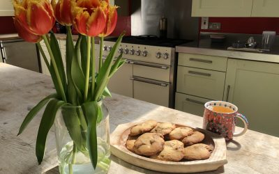 Spring's 15 Minute Chocolate Chunk Cookies